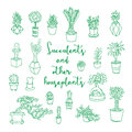 Succulents and other houseplants.