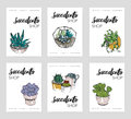 Succulents shop advertising cards collection. Colorful domestic plants store flyer set. Vector illustration on white