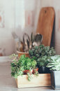 Succulents in a wooden box house plants green on metal countertop home decor retro style Stock Photos