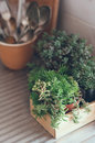 Succulents in a wooden box house plants green on metal countertop home decor retro style Stock Photography