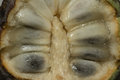 Sugar apple sweetsop noi na makro cut noi na in half what s inside the Royalty Free Stock Photography