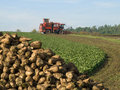 Sugar beet harvester Royalty Free Stock Photos