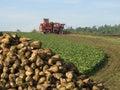 Sugar beet harvester
