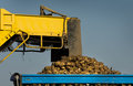 Sugar beet loading agricultural mechanization dumping in trailer Royalty Free Stock Photos