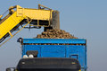 Sugar beet loading agricultural mechanization dumping in trailer Royalty Free Stock Photography