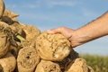 Sugar beet someone holding a in his hand Royalty Free Stock Image