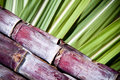 Sugar cane Stock Photo