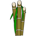 Sugar cane cartoon illustration showing three stalks of with leaves Royalty Free Stock Photos