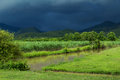 Sugar cane field under storm Royalty Free Stock Photo