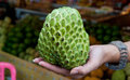 Sugar or custard apple in hand on fruit market background Royalty Free Stock Photo