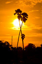 Sugar palm in the sunset at farmland Royalty Free Stock Photos