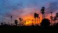 Sugar palm tree comme silhouette dans le temps de crépuscule de coucher du soleil de ciel Photo libre de droits