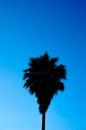 Sugar palm tree shadow Lizenzfreie Stockbilder