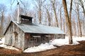 Sugar shack beautiful and aged during spring season in quebec canada Stock Photo