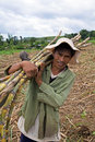 Sugarcane Worker Royalty Free Stock Image