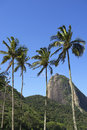 Sugarloaf mountain rio brazil palm trees pao de acucar standing in blue sky with de janeiro Royalty Free Stock Photo