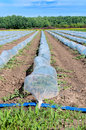 Sugr beet sugar beets greenhouses in vojvodina region Royalty Free Stock Photo