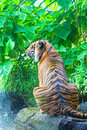 Sumatransky tiger sits at falls in the jungle Royalty Free Stock Photo