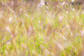 Summer abstract nature background with grass in the meadow. Royalty Free Stock Photo