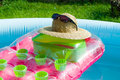 Summer accesories at the garden s swimming pool Royalty Free Stock Images