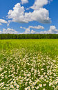 Summer afternoon kaluga region of russia Stock Image