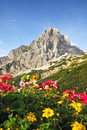 Summer alp mountains Royalty Free Stock Photos