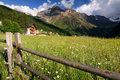 Summer alps and meadows Royalty Free Stock Photo