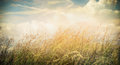 Summer or autumn field grass on beautiful sky background banner for website with nature concept Royalty Free Stock Images