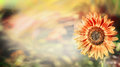 Summer or autumn nature background with red sunflower outdoor Royalty Free Stock Photography