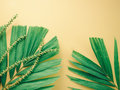 Summer background concept with green palm leaf and palm flower o Royalty Free Stock Photo