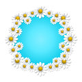 Summer background floral with camomile and blue sky Royalty Free Stock Image