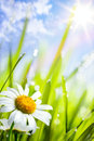 Summer background with flowers in grass