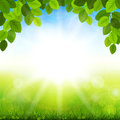 Summer background with green leaves vector illustration the Stock Photography
