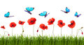 Summer background with poppies and butterflies. Royalty Free Stock Photo