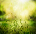 Summer background spring or abstract nature with grass in the meadow and sunset in the back Royalty Free Stock Photos