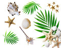 Summer background with tropical palms and seashells Royalty Free Stock Photography