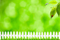 Summer backgrounds Royalty Free Stock Photography