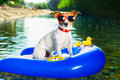 Summer beach dog on blue air mattress in refreshing water Stock Photography