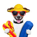 Summer beach dog with towel and flip flops Royalty Free Stock Photography