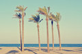 Summer beach landscape with palms, retro/vintage Royalty Free Stock Photo
