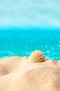 Summer beach shell beach Royalty Free Stock Image