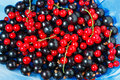 Summer berries black currant, red currant on blue dish Royalty Free Stock Photo