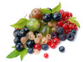 Summer berries with leaves Stock Images