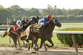 Summer Bird Wins The 2009 Belmont Stakes Royalty Free Stock Images