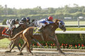 Summer Bird Wins The 2009 Belmont Stakes Stock Photo