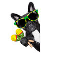 Summer brazilian dog Royalty Free Stock Photo