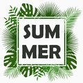 Summer card design with - tropical palm leaves, jungle leaf , exotic plants and border frame. Graphic for poster, banner. Vector. Royalty Free Stock Photo