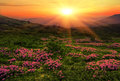 Summer Carpathian Landscape