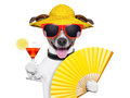 Summer cocktail dog cooling of with hand fan Stock Photography