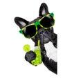 Summer cokctail dog Royalty Free Stock Photo